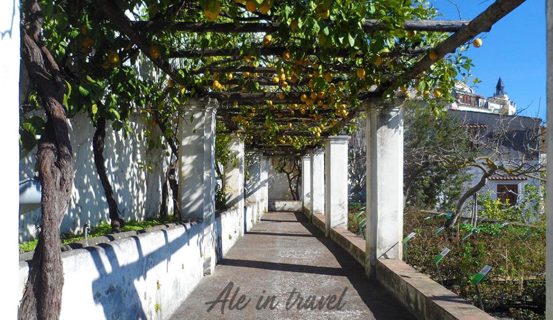 Limoneto Giardino della Minerva Salerno