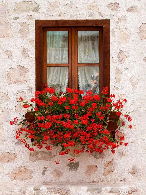 Davanzali fioriti delle finestre del centro storico di Pescocostanzo, borgo abruzzese.